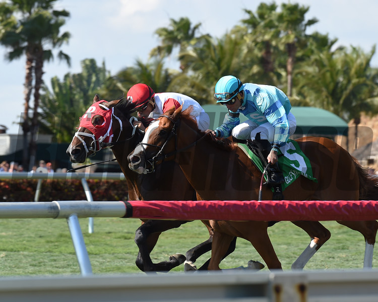 Kitten's Cat wins the 2017 Kitten's Joy Stakes<br /> Coglianese Photos/Lauren King