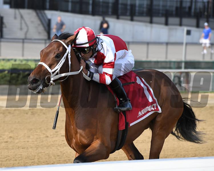 Daisy wins the 2017 Tempted Stakes<br /> Coglianese Photos/Joe Labozzetta