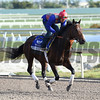 Semper Fortis - Gulfstream Park - January 25, 2017     <br /> Coglianese Photos/Lauren King