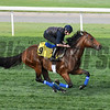 Dubai World Cup -Morning works 3/23/17, photo by Mathea Kelley/Dubai Racing Club<br /> Heshem, Dubai Turf