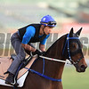Dubai World Cup -Morning works 3/22/17, photo by Mathea Kelley/Dubai Racing Club<br /> Dundonnell, Dubai Golden Shaheen