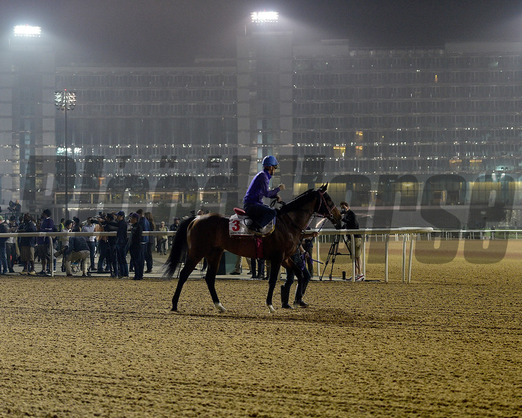 Dubai World Cup -Morning works 3/22/17, photo by Mathea Kelley/Dubai Racing Club<br /> Awardee, Dubai World Cup