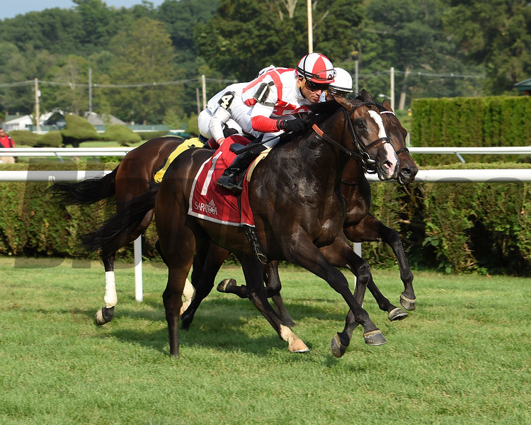 Bricks and Mortar wins the 2017 National Museum of Racing Hall of Fame Stakes<br /> Coglianese Photos/Susie Raisher