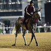 Dubai World Cup -Morning works 3/24/17, photo by Mathea Kelley/Dubai Racing Club<br /> Lani, Dubai World Cup