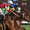 Gun Runner with jockey Florent Geroux moves quickly out of the gate and lead wire to wire to win the 90th running of The Whitney at the Saratoga Race Course  Saturday Aug. 5, 2017 in Saratoga Springs, N.Y.  (Skip Dickstein