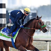 War Envoy - Gulfstream Park - January 25, 2017     <br /> Coglianese Photos/Lauren King