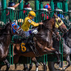 Curtin's Vow moves spritely from the gate making jockey Robby Albarado hold on tight in the 6th race on the card Saturday Aug. 19, 2017 at the Saratoga Race Course in Saratoga Springs, N.Y.  (Skip Dickstein