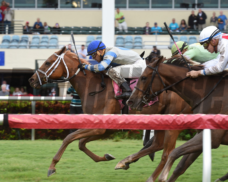 Malibu Saint wins the 2017 Wait a While Stakes<br /> Coglianese Photos/Lauren King