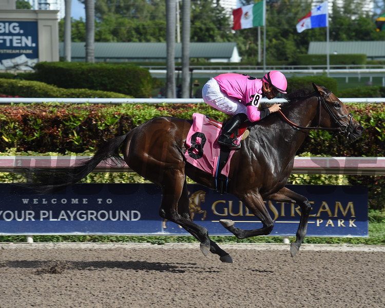 Arcelor - AOC, Gulfstream Park, December 7, 2017<br /> Coglianese Photos/Leslie Martin