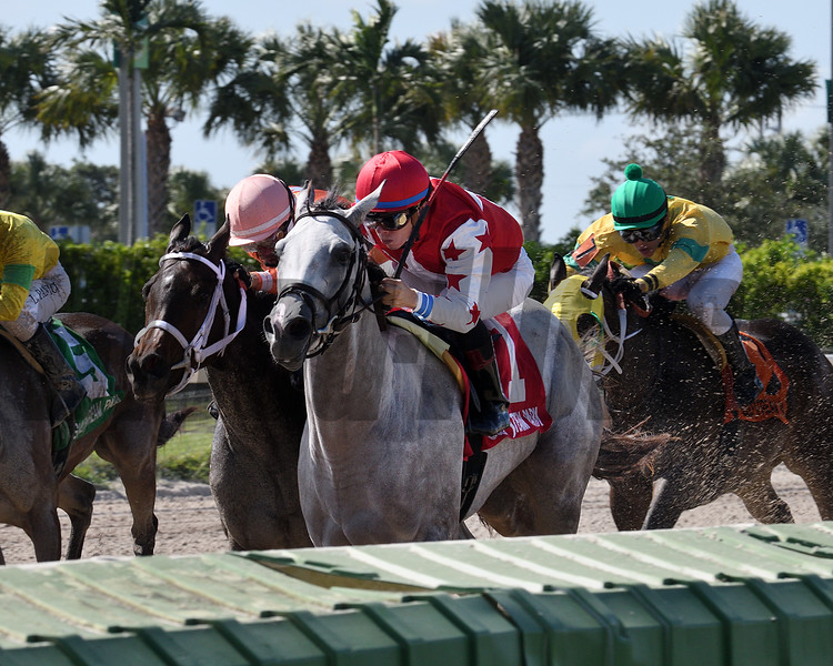 Silver Bay wins the 2017 Juvenile Fillies Sprint Stakes<br /> Coglianese Photos/Lauren King