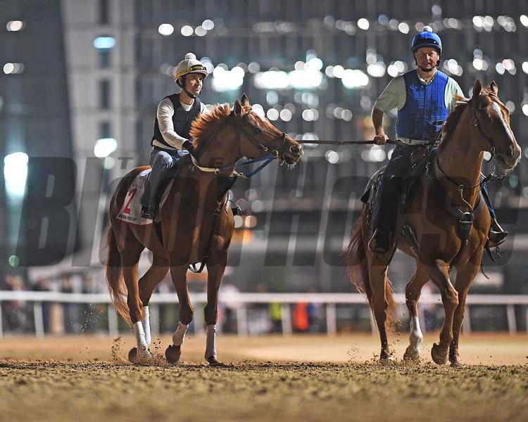 Dubai World Cup -Morning works 3/24/17, photo by Mathea Kelley/Dubai Racing Club