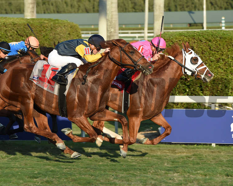 Taghleeb wins the 2017 W. L. McKnight Handicap<br /> Coglianese Photos/Alysse Jacobs