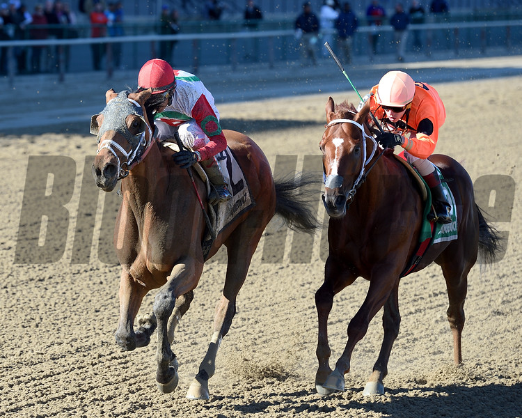 Send It In wins the 2017 Excelsior Stakes<br /> Coglianese Photos/Chelsea Durand