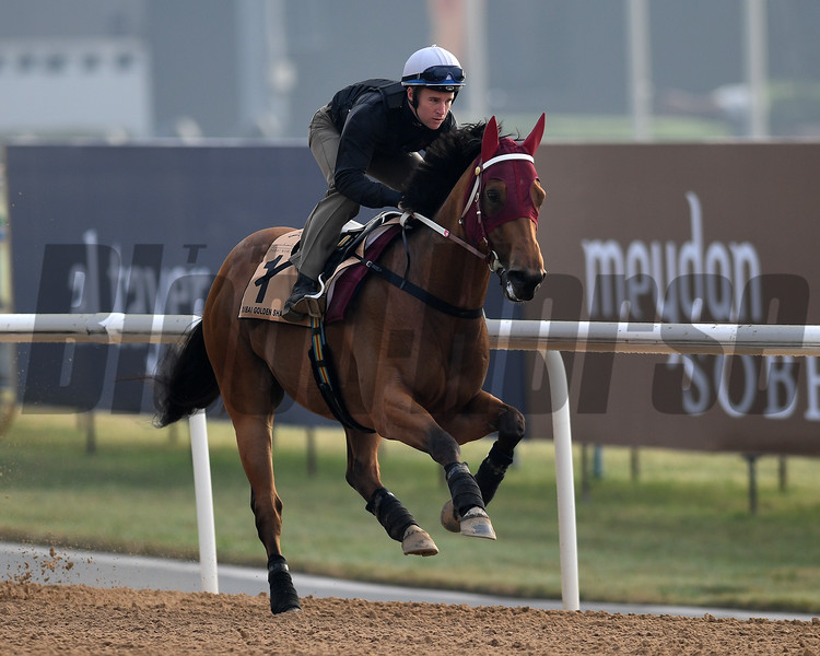 Dubai World Cup -Morning works 3/23/17, photo by Mathea Kelley/Dubai Racing Club<br /> Notlisntenin'tome, Golden Shaheen