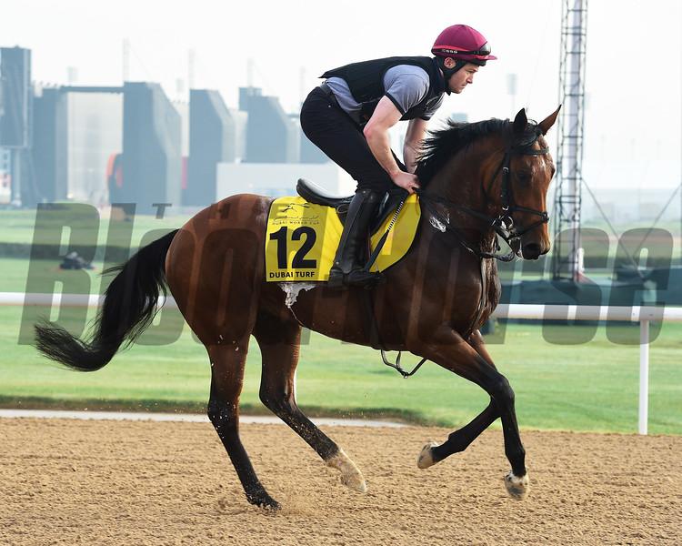 Dubai World Cup -Morning works 3/23/17, photo by Mathea Kelley/Dubai Racing Club<br /> Deauville, Dubai Turf