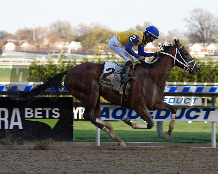 Bee Noteworthy wins the New York Stallion Series Stakes at Aqueduct Racectrack on November 12, 2017.<br /> Coglianese Photos/Chelsea Durand