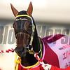 Mozu Katchan, no. 5, Mirco Demuro,  Queen Elizabeth II Cup, G!, Kyoto Racecourse, November 12 2017