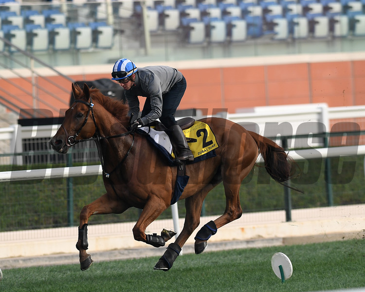 Dubai World Cup -Morning works 3/23/17, photo by Mathea Kelley/Dubai Racing Club<br /> Mutakayyef, Dubai Turf