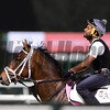 Dubai World Cup -Morning works 3/22/17, photo by Mathea Kelley/Dubai Racing Club<br /> Master Plan UAE Derby