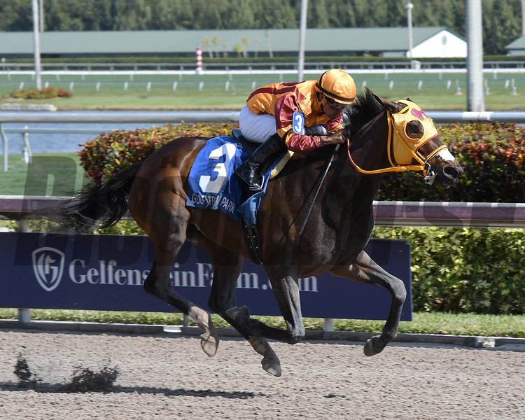 Curlin's Approval wins the 2017 Hurricane Bertie Stakes<br /> Coglianese Photos/Annette Jasko