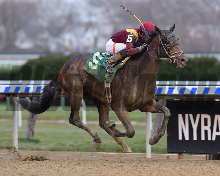 Catholic Boy wins the 2017 Remsen<br /> Coglianese Photos