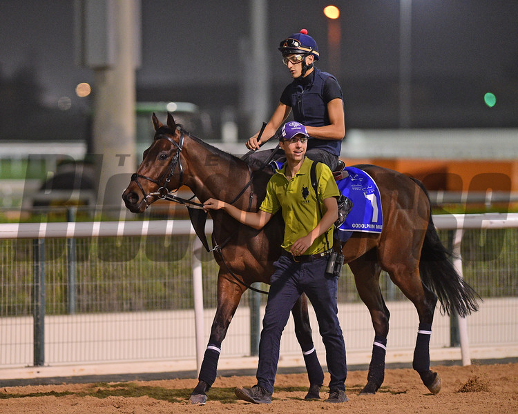 Dubai World Cup -Morning works 3/22/17, photo by Mathea Kelley/Dubai Racing Club<br /> Gifted Master, Godolphin Mile