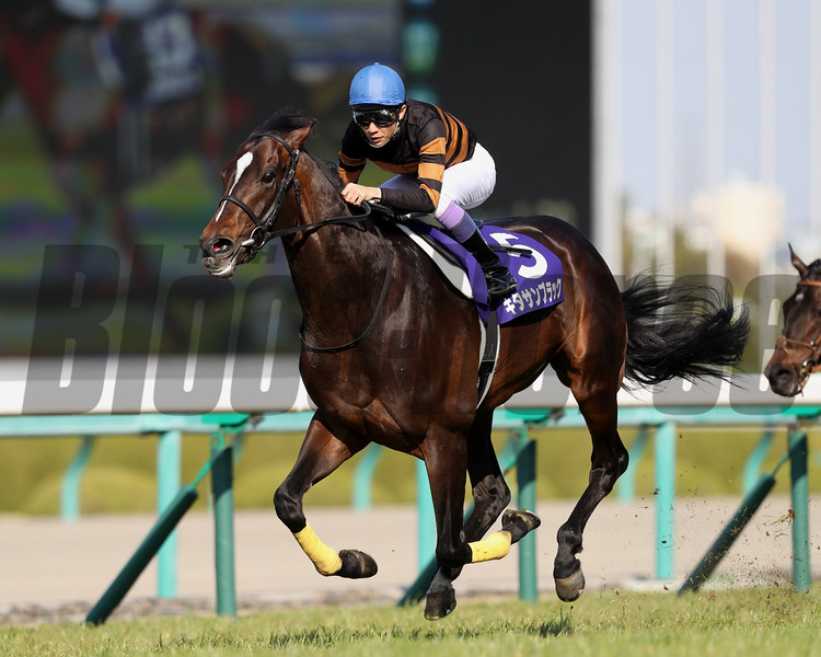 Kitasan Black wins the Osaka Hai (G1) at Hanshin Racecourse in Japan on April 2, 2017.