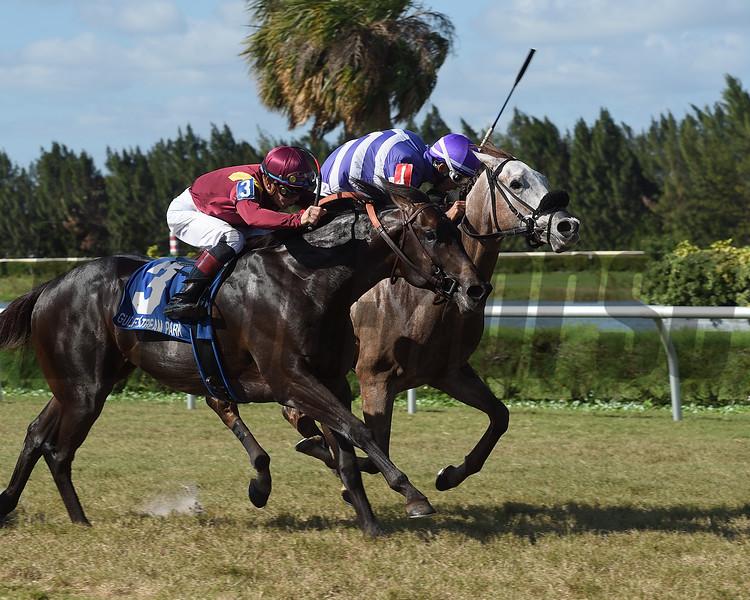 Nauti Buoy wins the 2017 Juvenile Turf Stakes<br /> Coglianese Photos/Leslie Martin