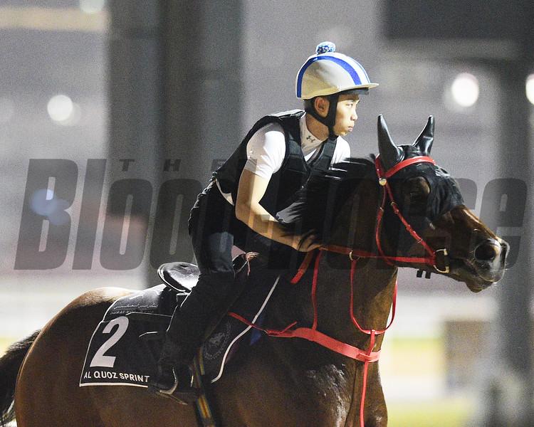 Dubai World Cup -Morning works 3/22/17, photo by Mathea Kelley/Dubai Racing Club<br /> Amazing Kids, Al Quoz Sprint