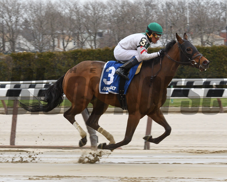 Do Share wins the 2017 Stud Muffin Stakes<br /> Coglianese Photos/Susie Raisher