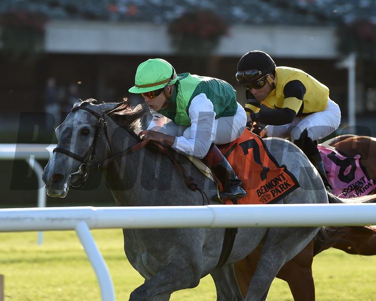 Significant Form wins the 2017 Miss Grillo Stakes (G3T)