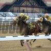Candid Desire wins the 2017 Hollie Hughes Stakes<br /> Coglianese Photos/Joe Labozzetta