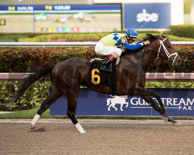 Greenpointcrusader - AOC, Gulfstream Park, January 27, 2017<br /> Coglianese Photos/Viola Jasko