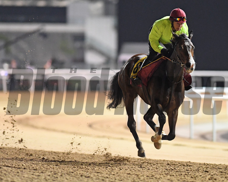 Dubai World Cup -Morning works 3/24/17, photo by Mathea Kelley/Dubai Racing Club<br /> Opal Tiara Dubai Turf