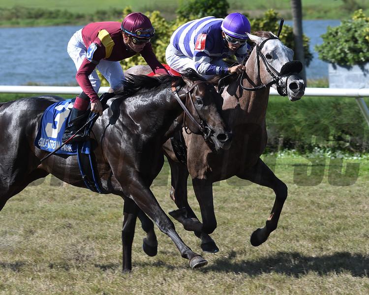 Nauti Buoy wins the 2017 Juvenile Turf Stakes<br /> Coglianese Photos/Lauren King