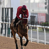 Dubai World Cup -Morning works 3/22/17, photo by Mathea Kelley/Dubai Racing Club Not Listenin'Tome, Dubai Golden Shahee