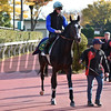 Guignol - 2017 Japan Cup Preparations<br /> November 24, 2017<br /> Katsumi Saito