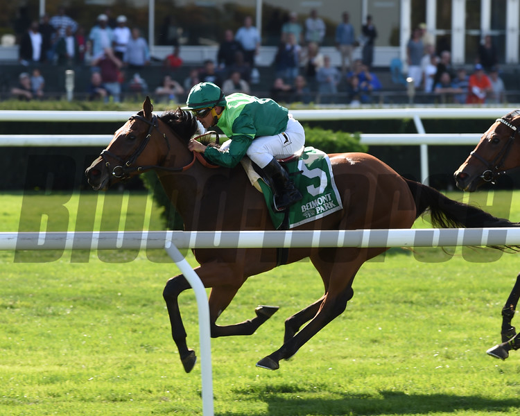 Fifty Five wins the 2017 Ticonderoga Stakes<br /> Coglianese Photos/Chelsea Durand