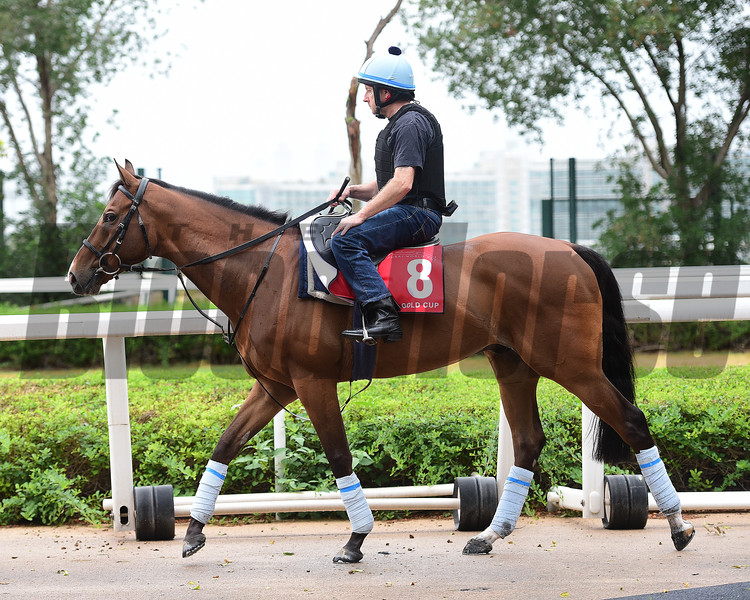 Dubai World Cup -Morning works 3/24/17, photo by Mathea Kelley/Dubai Racing Club<br /> Trip to Paris, Dubai Gold Cup