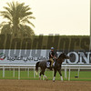 Dubai World Cup -Morning works 3/22/17, photo by Mathea Kelley/Dubai Racing Club<br /> Richards Boy, Al Quoz Sprint