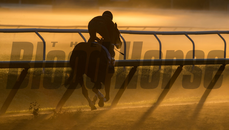 Gun Runner, an expected entrant in the Whitney Stakes takes to the track at the Oklahoma Training Center for his final work in preparation for the Grade 1 Stake Sunday July 30, 2017 at the Saratoga Race Course  in Saratoga Springs, N.Y. (Skip Dickstein