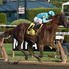 Twisted Tom wins the 2017 Albany Stakes<br /> Coglianese Photos