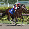 Navistar - Maiden Win, Gulfstream Park, December 16, 2017<br /> Coglianese Photos/Lauren King