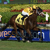 Machtree - AOC, Gulfstream Park, December 23, 2017<br /> Coglianese Photos/Lauren King