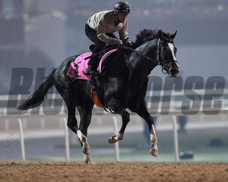Dubai World Cup -Morning works 3/22/17, photo by Mathea Kelley/Dubai Racing Club<br /> Epicharis, UAE Derby