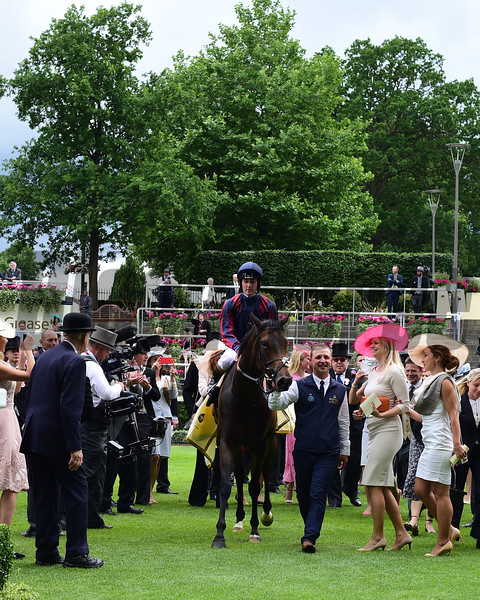 The TIn Man and Tom Queally win the Group 1 DIamond Jubilee Stakes, Royal Ascot, Asoct, UK, 6/24/17, photo by Mathea Kelley