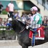 Arrogate wins the 2017 Pegasus World Cup<br /> Coglianese Photos/Adam Mooshian