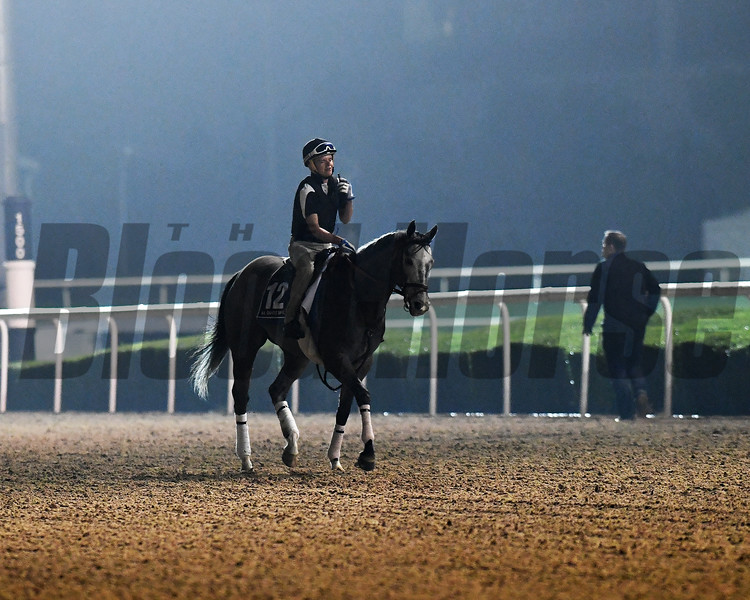 Dubai World Cup -Morning works 3/24/17, photo by Mathea Kelley/Dubai Racing Club<br /> Richards Boy, Al Quoz Sprint
