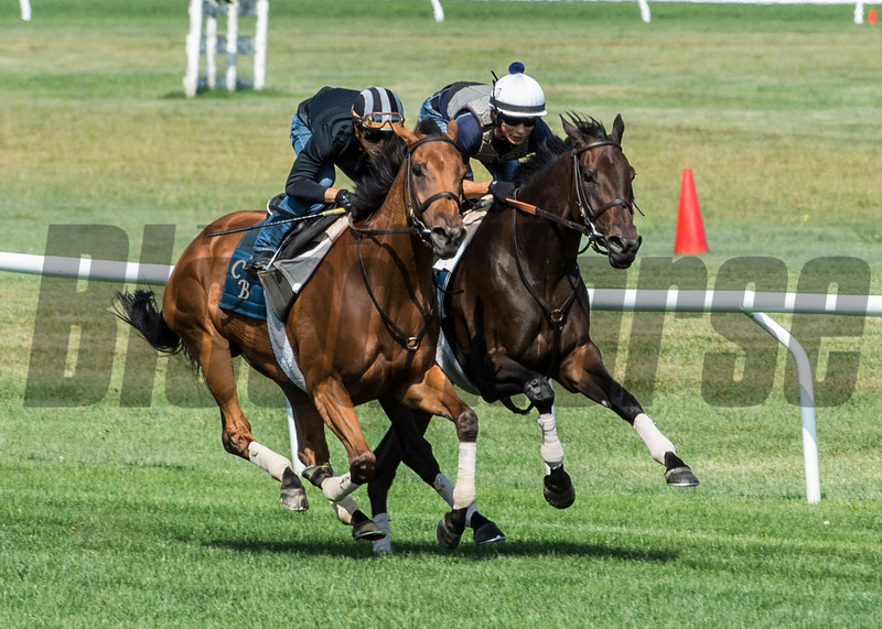 Lady Eli with regular jockey Irad Ortiz Jr., left works in tandem with Antonoe with exercise rider Walter Milazquez at the Oklahoma Training Center track Sunday Aug. 20, 2017 in Saratoga Springs, N.Y.  Photo: Skip Dickstein