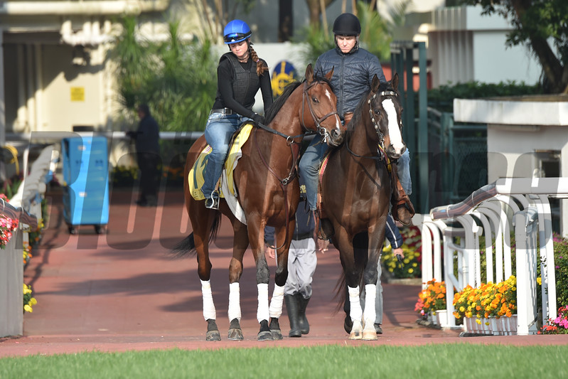 Stormy Liberal - Sha Tin Racecourse - December 9, 2017<br /> Katsumi Saito Photo